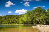 Lake and trees in Northern Norway — Stock Photo