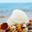 Seascape with shells — Stock Photo