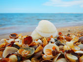 Seascape with shells — Stok fotoğraf