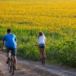 Teen couple riding bike in sunflower field — Stock Photo #45779337