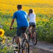 Teen couple riding bike in sunflower field — Stock Photo #48815597