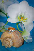 Wedding rings and white orchid on a blue background — Stock Photo
