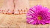 漂亮的穿着整齐脚修脚和粉红色的花。专注于花卉 — 图库照片