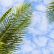 Tropical background — Stock Photo #20466245
