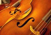 Violins — Stock Photo