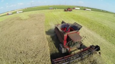 Combine harvesters on colza field. Aerial view — Stock Video