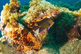 Underwater Photography — Stock Photo