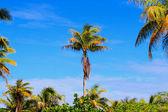 Rangiroa atoll — Stock Photo