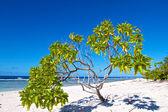 Rangiroa atoll, — Stok fotoğraf