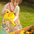 Stock Photo: Little girl watering flowers