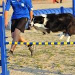 Border Collie agility test — Stock Photo #8064869