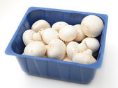 Button mushroom side view — Stock Photo