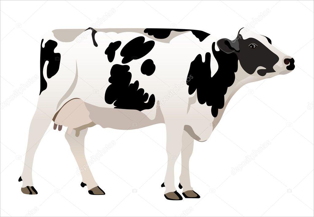 Milk Cow Vector Cow Vector Illustrator
