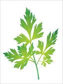 Branch of parsley — Stock Vector