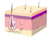 3d-huid schuine met knippen weg epidermis — Stockvector