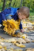 Cute little boy collecting autumn leaves — Stock Photo