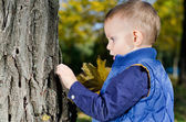 Small boy examining a tree — Stock Photo