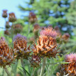 Stock Photo: Wild spiny thistle plant