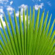 Lush green fplam frond or leaf — Stock Photo #29661381