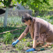 Woman weeding her vegetable garden — Stock Photo