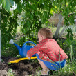 Stock Photo: Little boy playing in vegetable garden
