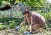 Woman weeding her vegetable garden — Stock Photo