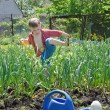 Stock Photo: Young boy working in the veggie garden