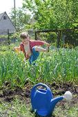 Young boy working in the veggie garden — Stock Photo