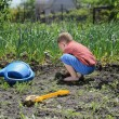 Stock Photo: Little boy digging in vegetable garden