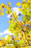 Coloful leaves — Stock Photo