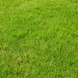 Background of fresh green spring grass — Stock Photo