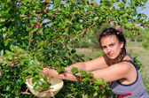 Foraging for summer fruits — Stock Photo