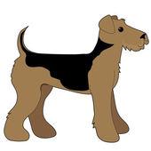Terrier airedale — Vetorial Stock