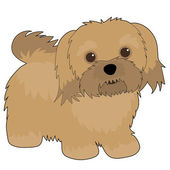 Havanese — Stock Vector