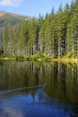 Reflection on Smreczynski lake in Koscieliska Valley, Tatras Mountains in Poland — Foto de Stock