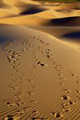 Desert landscape of gobi desert with footprint in the sand, Mongolia — Stock Photo