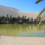 Oasis de huacachina dans le désert d'atacama, Pérou — Photo #44081073
