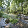 Stock Photo: Creek in Black Hills