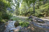 Creek in the Black Hills — Stock Photo
