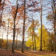 Stock Photo: Fall in North Carolina