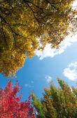 L'automne en caroline du nord — Photo