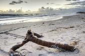 Východ slunce v sebastian, florida — Stock fotografie