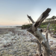 Stock Photo: Sunrise at Merritt Island Wildlife Refuge