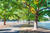 Green trees in park and asphalt road. — Foto Stock