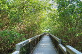 Ding Darling Nature Reserve in the Summer — Stock Photo