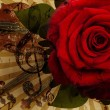 Music rose and violin background — Stok fotoğraf