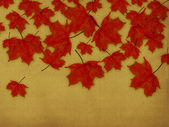 Paper with red leaves — Stock Photo