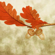 Stock Photo: Oak leaves with two acorns