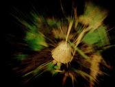 Grunge mushroom — Stock fotografie