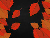 Blackboard with leaves — Stock Photo